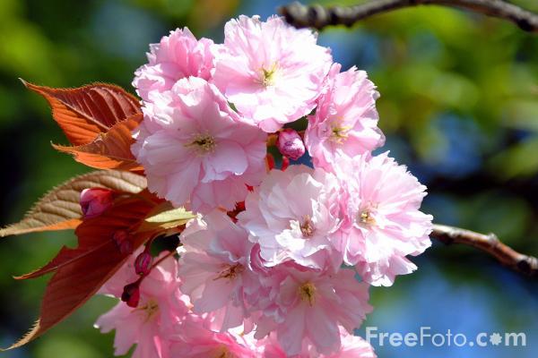 http://www.dotnetspider.com/attachments/forum/143897-380-19_10_13---Spring_web.jpg